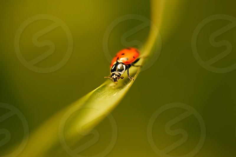 orange and black beetle photo