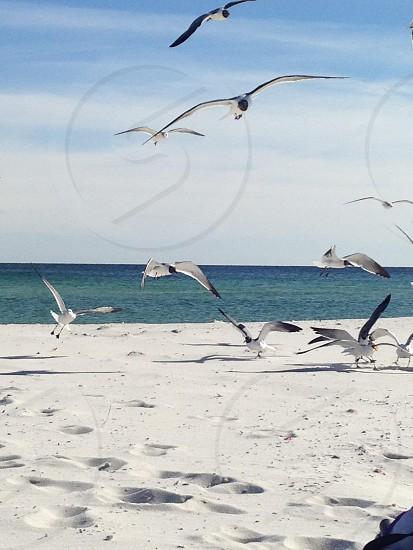 Beach scene. photo