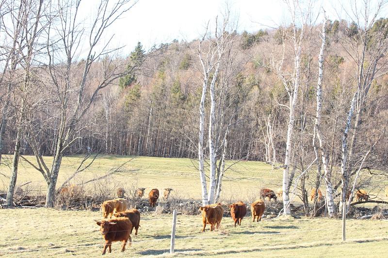 Stowe Vermont  photo
