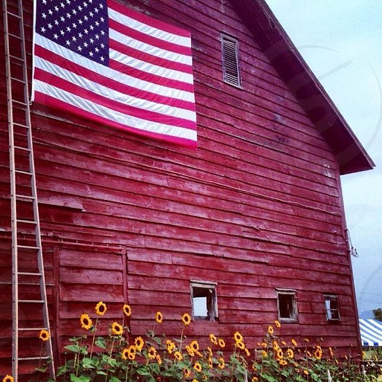 red barn with flag and sunflowers country still life upstate ny photo