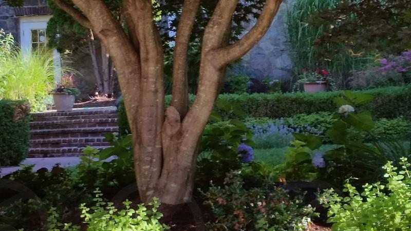 Tree garden courtyard photo