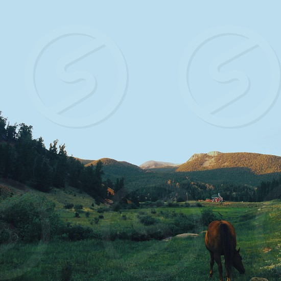 horse in front eating grass photo