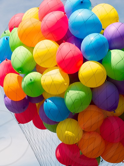 multicolored balloons inside net photo
