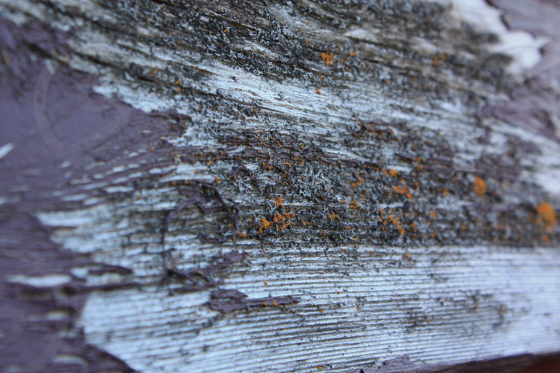 Natural Old Wood Pattern Closeup. Taken in Goldstream Park Victoria BC Canada. photo