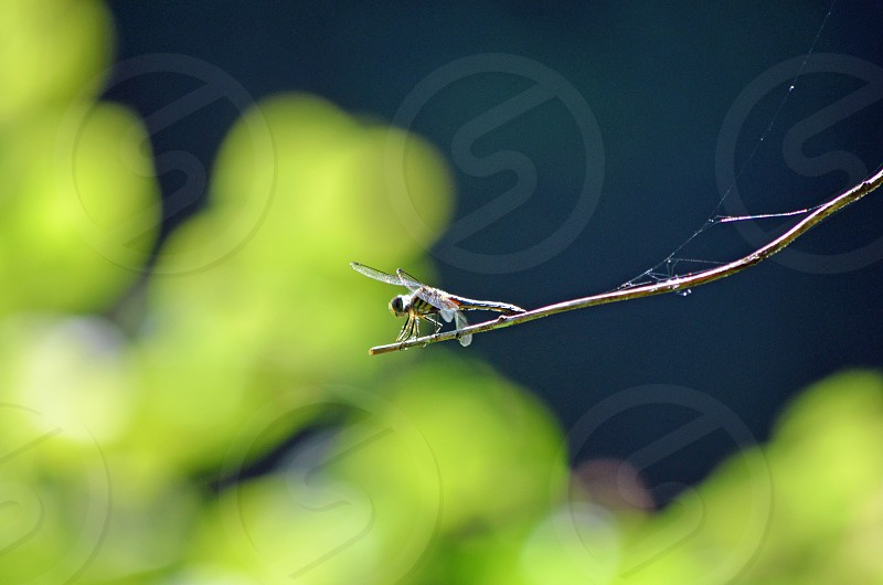insect on branch photo