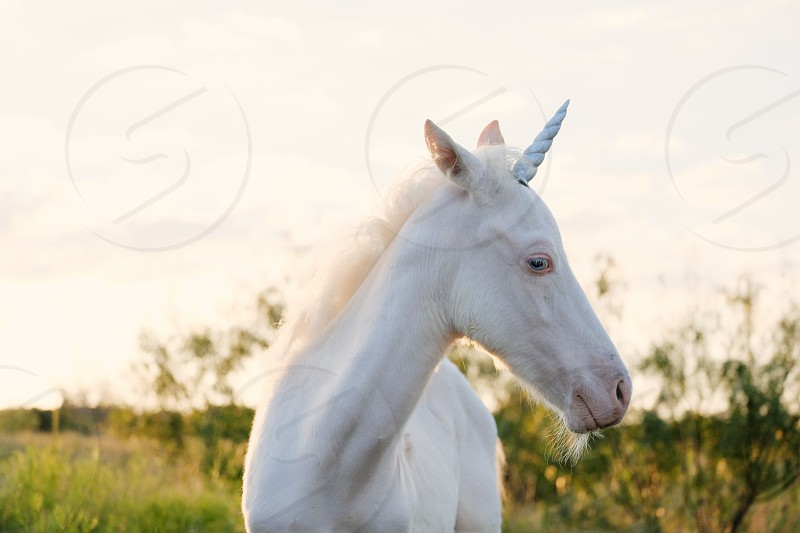 White colt foal with unicorn horn. photo