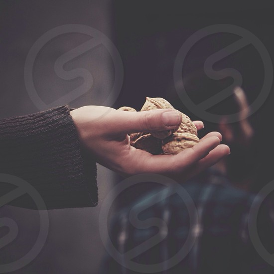 person holding a brown nuts photo