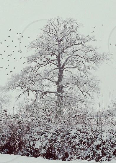 snow tree birds flight christmas winter photo