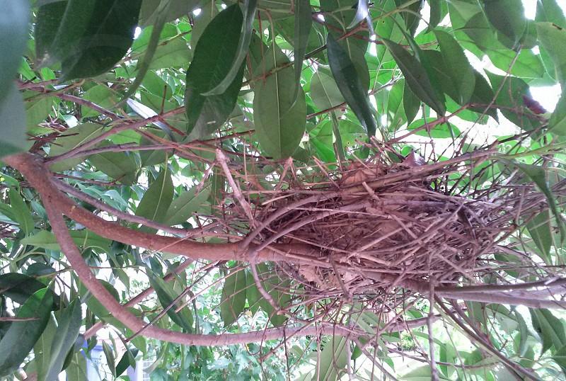 bird nest on branch in forest photo