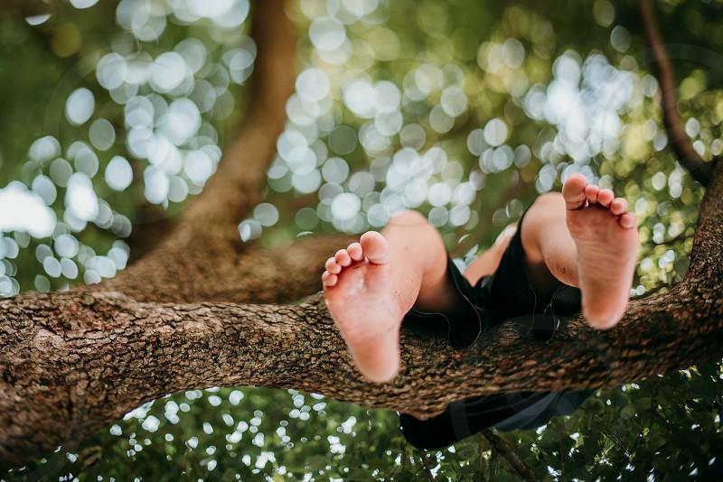 Tree bokeh photo