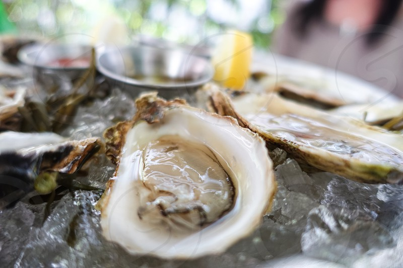 Fresh raw oysters on the half shell with lemon on ice shallow depth of field focus photo