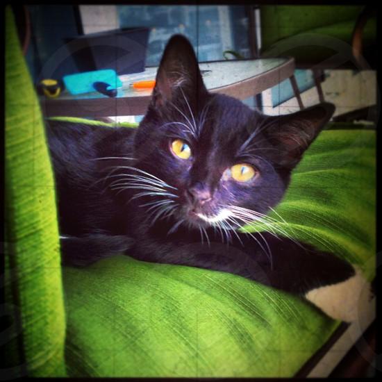 #meow photo