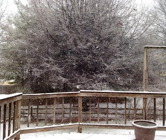 Beginning Snow photo