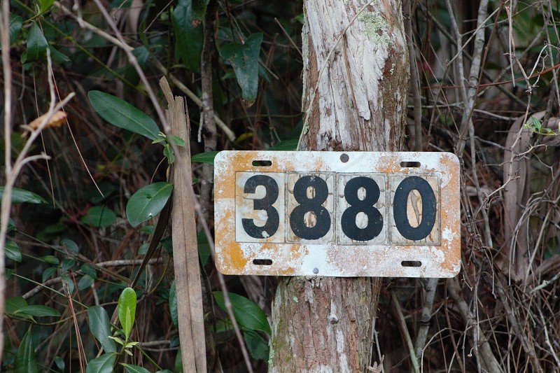 3880 on tree photo