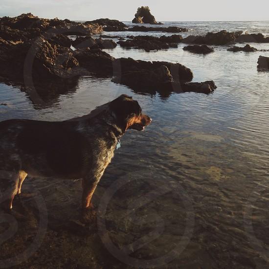 dog on seaside photo