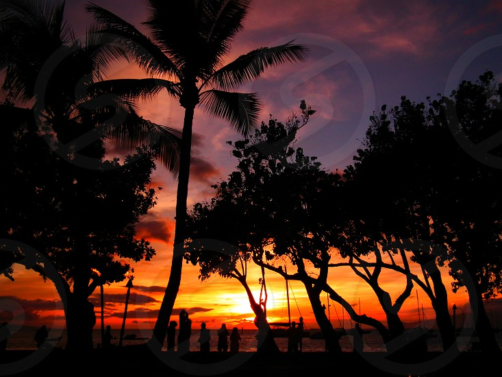 silhouette of people watching the sunset and trees photo