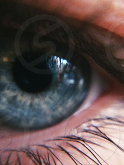 Shot using the Macro lens in Olloclip's 4-1 kit with the 5s. photo