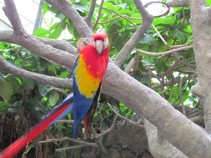 Natural colorful parrot in the jungle. photo