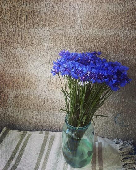 cornflowers flowers bouquet decoration blue photo