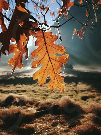 brown leaf photo