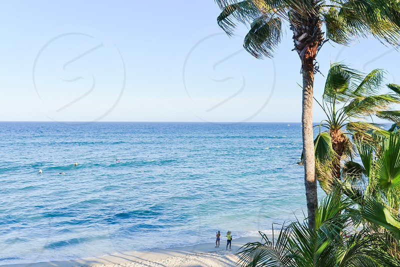 blue sea and palm trees photo