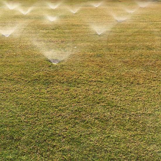 Los Angeles sprinklers on turf lawn  photo