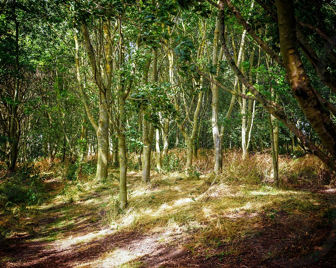 Perfect woodland clearing for camping photo