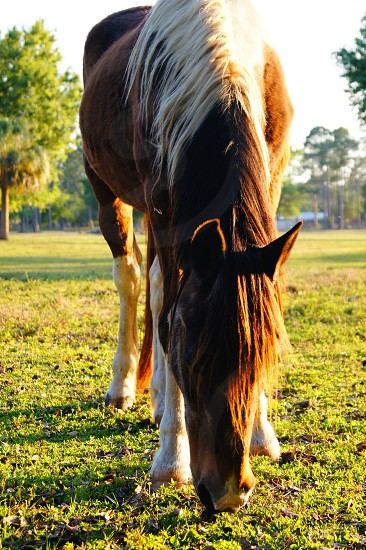 closeup photography of brown and white horse photo