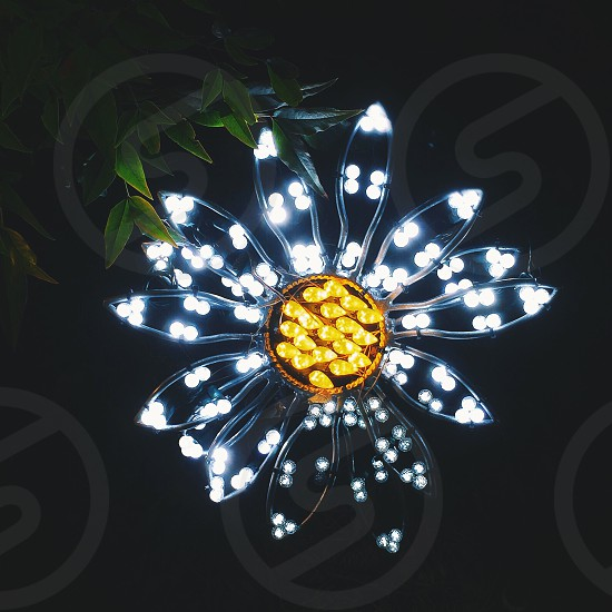 lit flower  decor photo