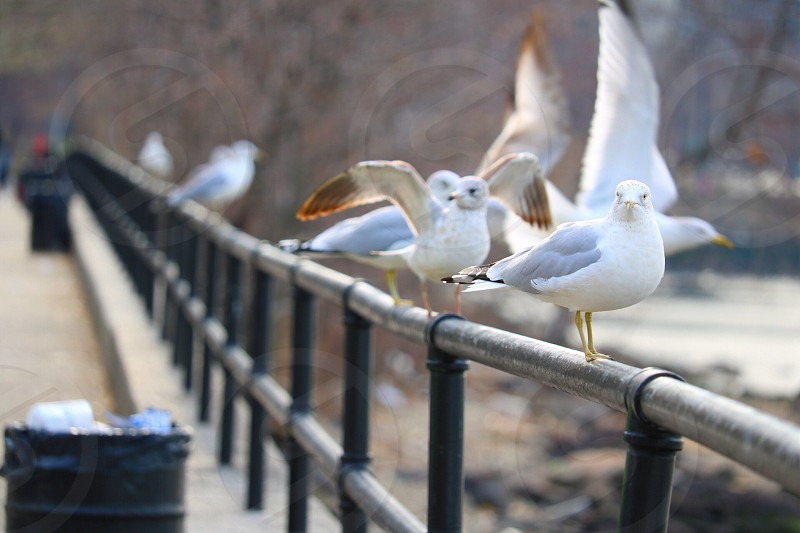 Seagulls seaside shore coastal birds nature photo