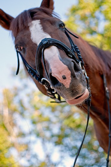 Close up ortrait of brown horse photo