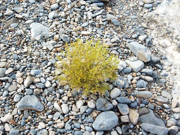 green plant on rocks photo