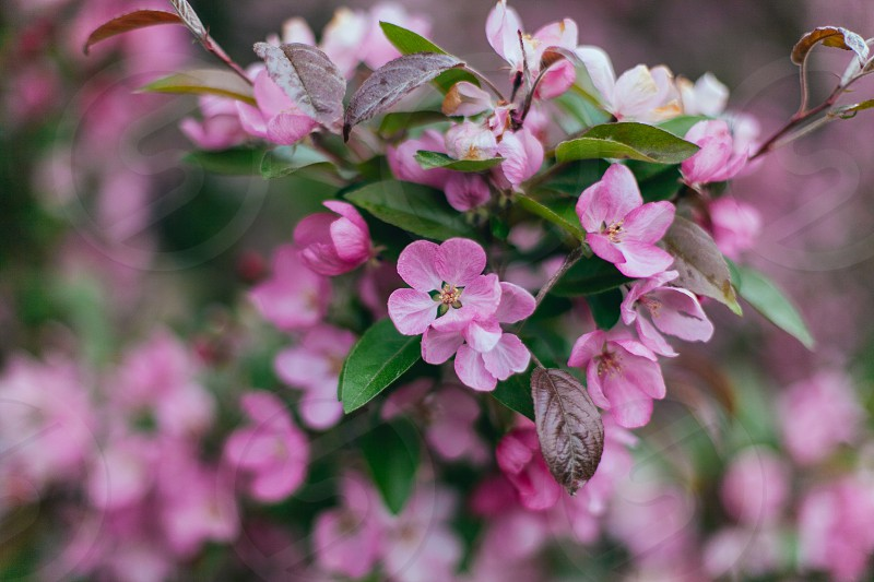 Blossoms spring floral flowers photo