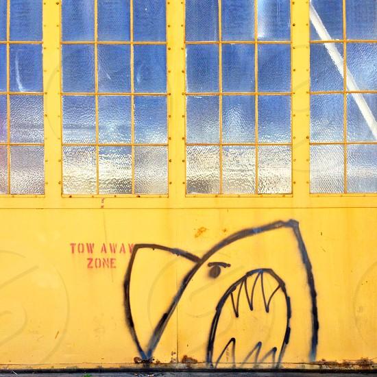 Shark graffiti photo