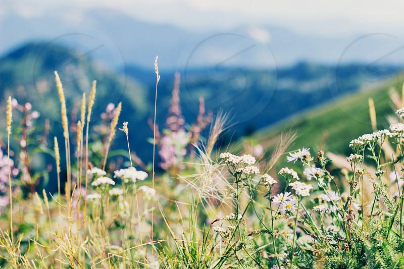 Mountain side wild flowers photo