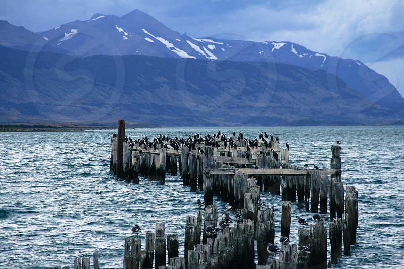 Cormorants gather on an old pier on the Last Hope Sound near Puerto Natales Patagonia Chile. photo