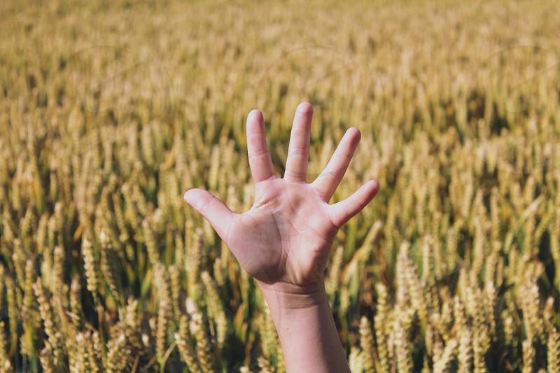 Hand cornfield fingers stretch sensory photo