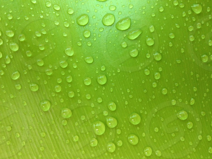 green leaf with drops water  photo