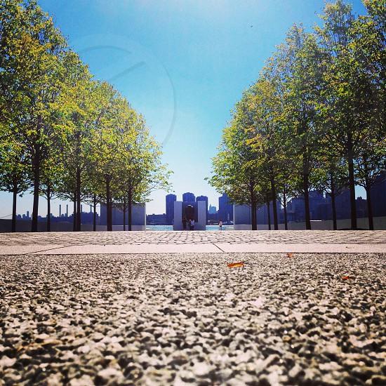 Cityscape through green leaf tree path photo