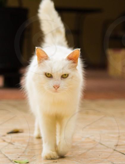 white furry cat photo