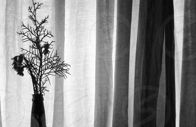 greyscale photo of flowers in vase beside curtain photo