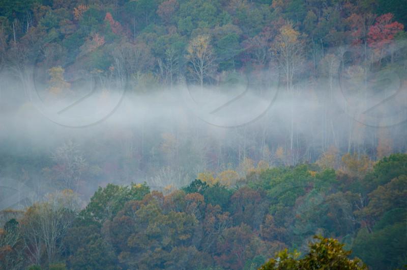 fog trees mountains photo