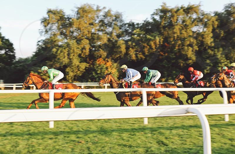 speed race horses photo