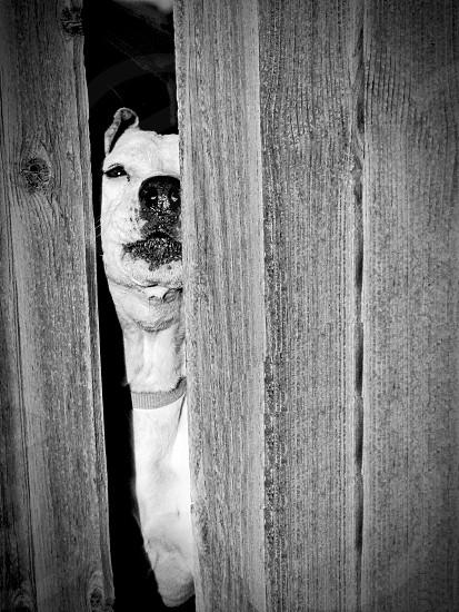 Peek-a-Boo Pup photo