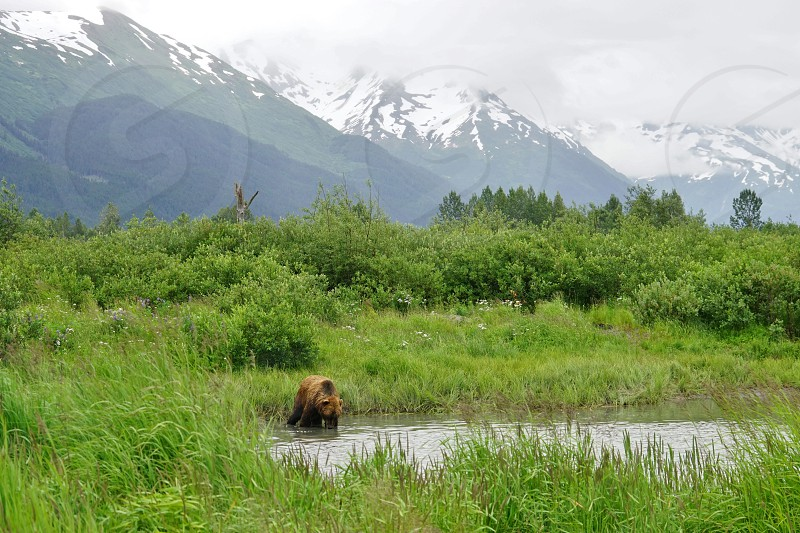 Alaska Wildlife Conservation Center - Anchorage Alaska photo