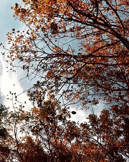 Fall colors trees photo