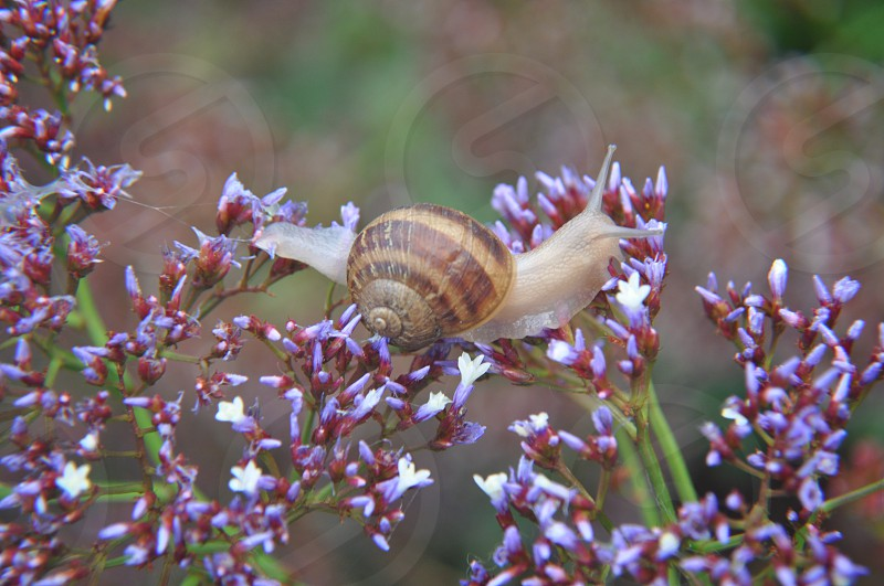 Snail on top of flower photo