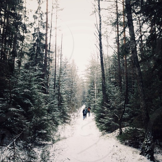 Exploring winter wood in Minsk Belarus. photo
