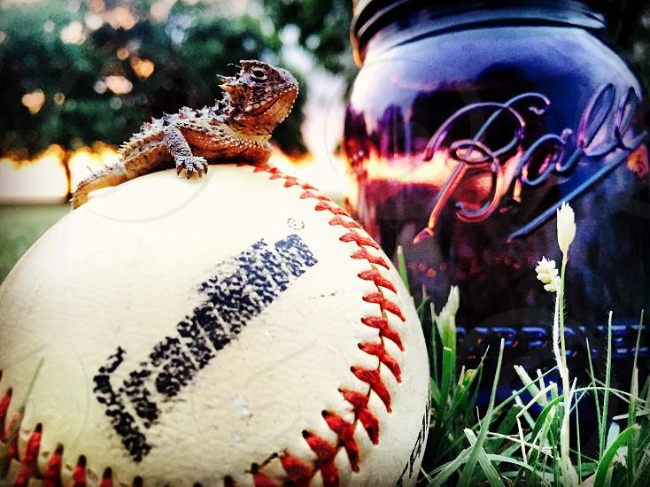 Baseball mason jar sunset horned frog photo