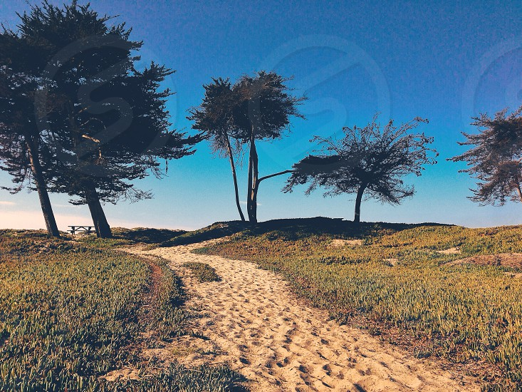 brown sandy pathway and trees photo